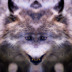 l u p a (epiclectic) Tags: reflection animal photoshop mirror design graphic wildlife humor perspective manipulation images symmetry reflect symmetrical mutant twisted enhancement epiclecticcom epiflection epiflectionbyepiclecticcom