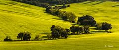 Verde primavera (1nieves) Tags: espaa toledo concursos urda