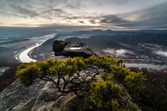 old trees on sandy rocks (lactivitiez) Tags: tree saxonswitzerland elbe labe lilienstein rocks sunrise hiking outdoors nature mountains lights sun water noggapix pine color