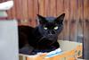 くろにゃん (Eric Flexyourhead) Tags: nishinari nishinariku 西成区 osaka osakashi 大阪市 kansai 関西地方 japan 日本 city urban detail fragment cat chat katze kat katt gatto neko 猫 nekochan 猫ちゃん cute kawaii かわいい blackcat kuroneko くろにゃん くろねこ shallowdepthoffield sonyalphaa7 zeisssonnartfe55mmf18za zeiss 55mmf18