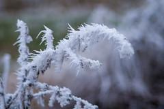 Frost (RalfK61) Tags: januar 2017 01