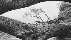 Framed by nature (Maike B) Tags: steilküste lübeckerbucht ostsee balticsea rahmen frame angler baumrinde
