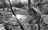 Left by a flood (flowerweaver) Tags: arborsculpture flood nature natural artistic sculptural wood twigs river trees