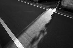 _R015077_1 (yukio sakaue) Tags: ricohgr gr bw blackandwhite border horizon shadow silhouette h