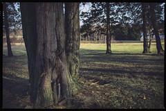 Light & Shadows I, 2016.03.09 (Aaron Glenn Campbell) Tags: psuwb pennstatewilkesbarre campus lehman backmountain luzernecounty nepa pennsylvania sony a6000 ilce6000 mirrorless rokinon 12mmf2ncs wideangle primelens manualfocus emount faded crossprocessing nikcollection analogefexpro plugins google filters shadows photoshopcc2017 sunlight rural country