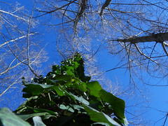 Always Green. (sebastiengobbie) Tags: nature green winter hiver contraste color vert france provence aixenprovence arc