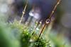 DSC_9454 (xav_roberts) Tags: macro closeup dew nikonv1 nikonft1 nikon sigma105mmf28mm water droplets morningdew rain raindrops