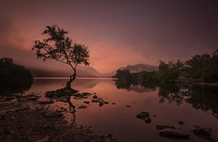 A Moment to Savour (Captain Nikon) Tags: opoty2016 opoty outdoorphotographeroftheyear portfoliobook llynpadarn lonesometree silhouette snowdonia lake northwales wales