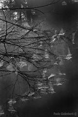 ragnatele, cobwebs (paolo.gislimberti) Tags: biancoenero blackandwhite wood bosco alberi trees rami branches architettutaanimale animalarchitecture