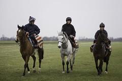 Trio (Daniela Bowker) Tags: horse pony gallop work newmarket heath newmarketheath cambridgeroad