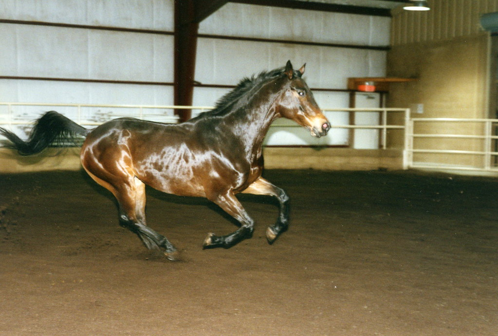 Hickory Galloping
