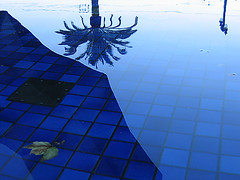 pool (fotogail) Tags: sanfrancisco california blue abstract reflection tree wet water pool azul catchycolors grid leaf palm bleu tiles embarcadero grids fotogail forestevidence top2005 utatafeature sfchronicle96hours your300pre2006favesthanks ilobsterit