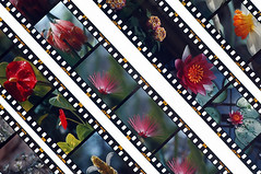 Slide film 01 (dolphin_dolphin) Tags: flower wow wonder topv1111 slidefilm flowerpicturesnolimits