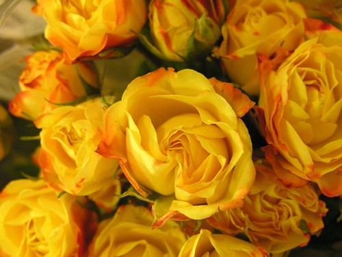Yellow Roses for Irma by Old Shoe Woman.