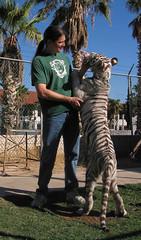 Dora -- White tiger (FuzzyButt) Tags: dora whitetiger fercos tiger bottle