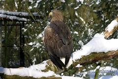 Zee-arend (19digital53) Tags: animals zoo rhenen