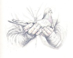 Soon, I will fly away.... (Lynn Morag) Tags: bird pencil scotland interestingness hands drawing pigeon 100v10f altruism womenonly lynn papa interestingness11 lynnmorag colouredpencil copyrightlynnmorag photodomino144 i500 artwithsoul photodomino364 allrightsreserved