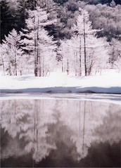 water mirror2 (転倒虫) Tags: white snow reflection ice nature water japan forest mirror 冬 kamikouchi 上高地 水鏡