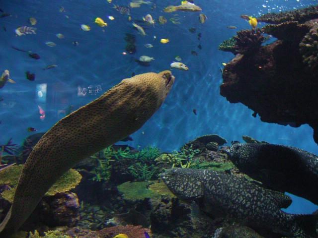 Moray eel.