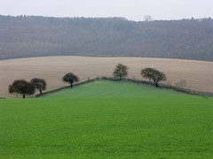 Hale/Chilterns (algo) Tags: winter england green topv111 skyline 510fav landscape photography countryside interestingness woods farm wheat chilterns buckinghamshire explore fields farms crops algo hedges ploughed homecounties flaxseed farmscape explored explore7