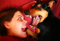 Death metal acapella duo (-Antoine-) Tags: 2005 red dog chien metal rouge death topf50 topv333 teeth yawn clash communication bark ge camille genevive dents genevieve barking yawning acapella fvrier baller jappement japper ballement psychologyofcolors antoinerouleau