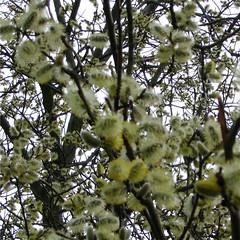 spring is in the air (beta karel) Tags: tree nature square karel betakarel meridiaanpark betakarel