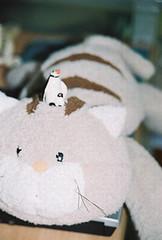 น้องแมวกะเจ้าเพนกวินที่ห้อง