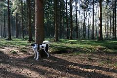 Roden: deep woods marking (Henk Binnendijk) Tags: joop dog hond 2005 roden