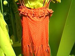 Cute dress at Schipol (kid swizzle) Tags: phonecam dress amsterdam schipol airport gift present greentint peach