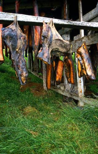 Hákarl - Dried shark meat (fermented)