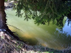 Magic water (Linda6769) Tags: blue reflection tree green water grass sunshine germany spring pond ast branch village thuringia explore twig teich reflexion spruce baum conifer zweig gewsser nadelbaum hildburghausen konifere explored brden