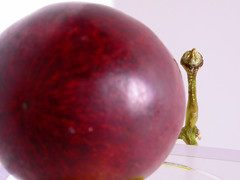 Red Grape with Stem (dulcelife) Tags: macro macrophotography closeup plantlife vines grape grapes fruit redfruit vine plant plants wine winemaking dulcelife nikon nikon4500