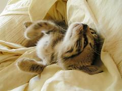 katinelis chihiro lovoje