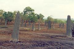 Magnetic ant hills