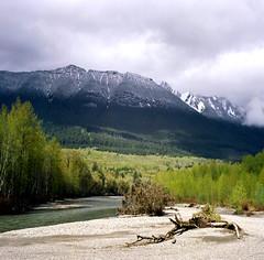 North Fork Stillaguamish River v2, 2005 (artandscience) Tags: stillaguamish kodak100uc rolleiflex tlr mediumformat film