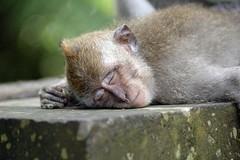 sleepy_mk