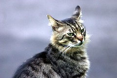 The Feral Cats of the Iao Valley (Weave) Tags: cat hawaii maui iao feralcat feral ericweaver wildekat chatsauvage wildekatze gattoselvaggio gatoselvagem gatosalvaje ornerycats