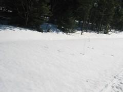 Hmmm what was I thinking? (Brad Morrissey) Tags: canada 2005 quebec huskie husky sledding sled dog