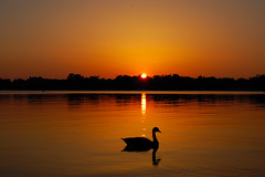 Wind Down Slowly (pHlow) Tags: sunset lake geese bravo searchthebest north canadian norman carolina canadagoose cotcmostinteresting specnature fourfaves fourfavs1 fourfavs3 fourfavs4 p1f1 impressedbeauty