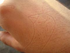 chicken on my hand (ion-bogdan dumitrescu) Tags: sleeping bird chicken hand mark chick imprint bitzi ibdp ibdpro wwwibdpro ionbogdandumitrescuphotography