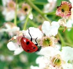 IMG_65141 (Gema VonSeka) Tags: insects creatures florafauna