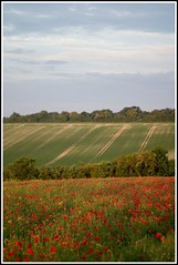 Poppies and Oil Seed Rape (Christopher_Hawkins) Tags: uk rural geotagged canoneos10d hampshire poppy poppies basingstoke poppyfield geolon1107731 chrishawkins geolat51221454 farleighwallop broadmere