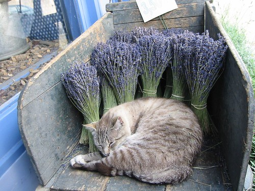 Любимые запахи кошки Томасины   Поэзия ...: poezia-aromatov.ru/?p=656