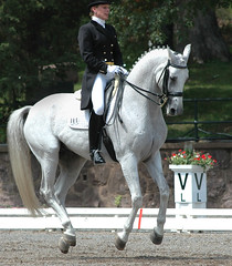 USET Dressage Festival of Champions (Rock and Racehorses) Tags: nj gladstone dressage flyinganimals usef