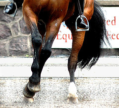 Six feet (Rock and Racehorses) Tags: horses nj gladstone dressage usef