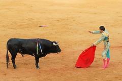 Bull Fight 2 (iwillseetheworld) Tags: blood spain bulls seville bullfight bullfighting animalcruelty iwillseetheworldcollection