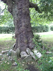 tree of death (Yersinia) Tags: uk greatbritain england london public cemetery geotagged se europe unitedkingdom britain eu explore gb safe guesswherelondon southlondon southwark faved travelcard honoroak zone2 londonset londonbylondoners londoncemeteries gravestombsandcemeteries ccnc southoftheriver interestingness326 photographical se4 yersinia postcoded londonpool camberwellnewcemetery geo:lat=51455865 geo:lon=0043425 graveyardoftheunguessed gwl2006 casioexz110 postedbyyersinia cemeteryuk southlondonset southwarkpool cemeteriesset gwlg londonboroughcollection