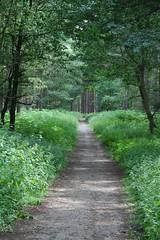 Fancy a Stroll (Splatadude) Tags: trees leaves path clumberpark
