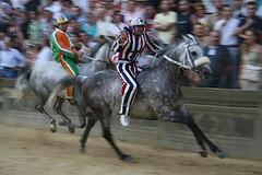 palio - luigi bruschelli on two-time palio winner zodiach