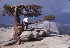 Ansel Adams' Favorite Tree (Cliff Stone) Tags: yosemite sentineldome jeffreypine